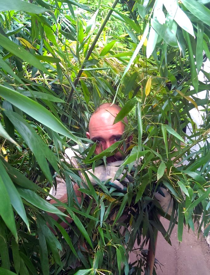 Bambus-Liebe